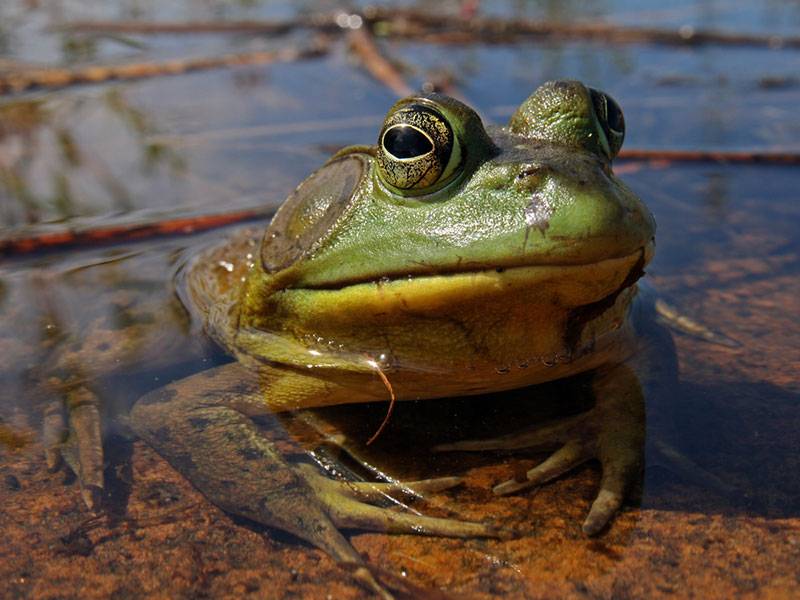 "Set Your Priorities by ""Eating a Frog"" 